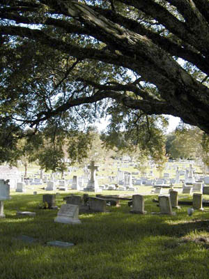 An oak tree leaving shadows over headstones in a city cemetery